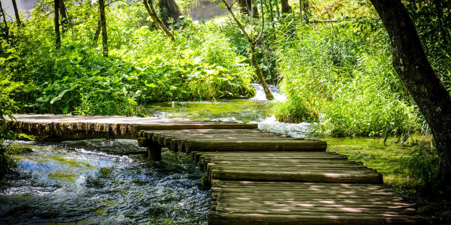 A stream with a wooden bridge over it in a green forest.